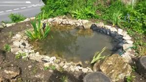 Selsley pond
