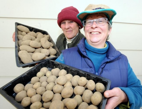 Stroud Potato and Seed Bank Day 2020
