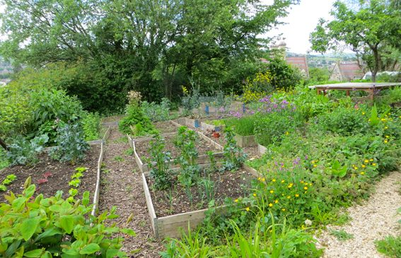 Planted beds at Selsley Community Growing Scheme