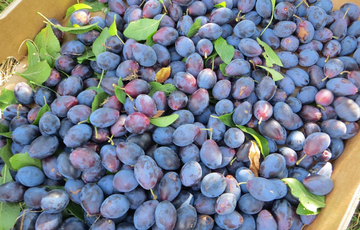 The Fruit Exchange Stroud